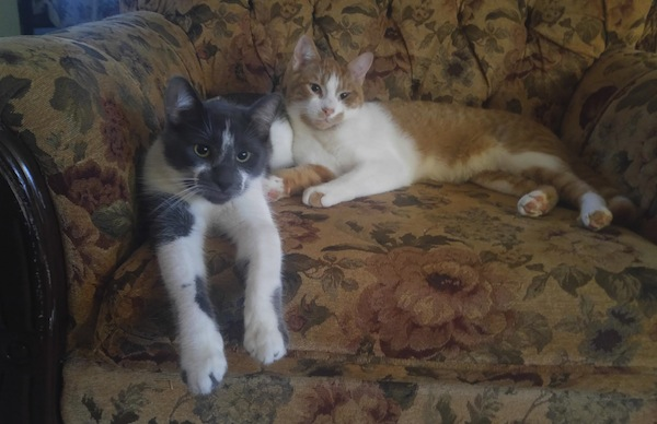 Adopted cats Archie and Oliver. oasisanimalrescue.ca