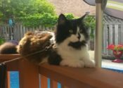 Buddy. Stunning, Young Male Cat Needs A Home