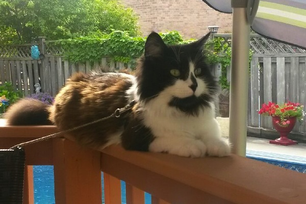 Buddy. Young male cat for adoption. oasisanimalrescue.ca