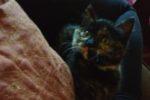 Mookie. Kitten Found On Highway, Finds Loving Home
