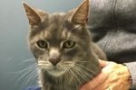 Chaos. Healthy, Senior Cat In Need Of Foster/Perm Home