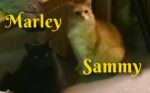 Marley And Sammy. Cats Need Foster Or Forever Home Urgently