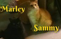 Marley and Sammy. Cats for adoption. Toronto, GTA, Durham Region
