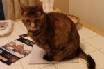 Cleo. Lap Cat, Loves To Cuddle, Can You Provide A ..