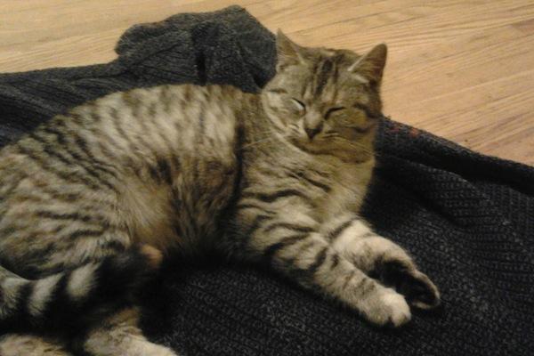 Gina. Loving Cat For Adoption