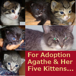 Cat, kittens for adoption. Toronto GTA, Durham Region
