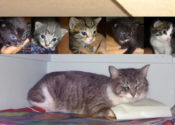 Agathe. Momma Cat And Five Kittens For Adoption – UPDATE