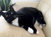 Ursa. Gentle Cat Seeking Quiet New Forever Home