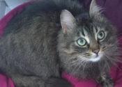 Scarlett. Five Kittens Arrived April 14 – UPDATE