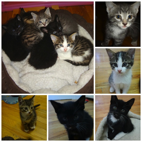 Agathe's kittens, for adoption. Toronto GTA, Durham Region