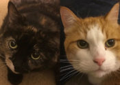 Honey And Sam. Sociable Cats Needing Foster/Perm Home(s)