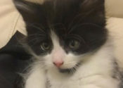 Forest. Young Rescue Kitten Seeks Loving Home