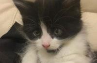 Forest. Rescue kitten for adoption. Toronto Durham Region