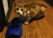 Gulliver. Cat Rescued From City Streets. Needs New Home