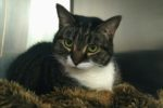 Lady. Shy, Homeless Cat Seeks Loving New Home