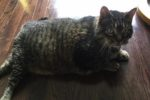 Jack. Cat's Owner Moving Into Care Facility, Must Find Loving ..