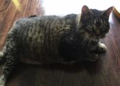 Jack. Cat's Owner Moving Into Care Facility, Must Find Loving Home