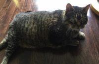 Jack. Beloved cat must re-home