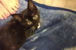 Pixie. New Home Found For Adorable Rescue Kitten