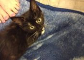 Pixie. Adorable Rescue Kitten Seeks Forever Home
