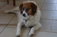 Moe. Dog for adoption. Oasis Animal Rescue. Toronto GTA, Durham Region
