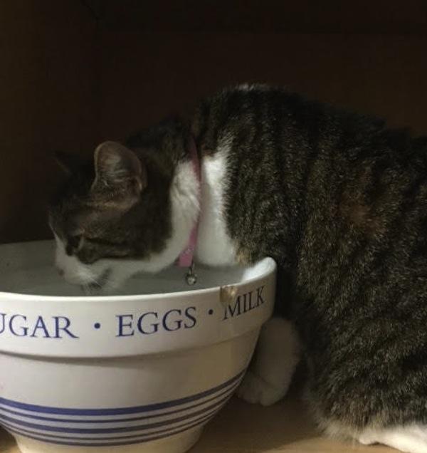 Zoe. Cat for adoption. oasisanimalrescue.ca