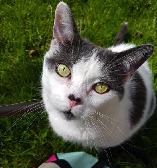 Jasper. Cat for adoption