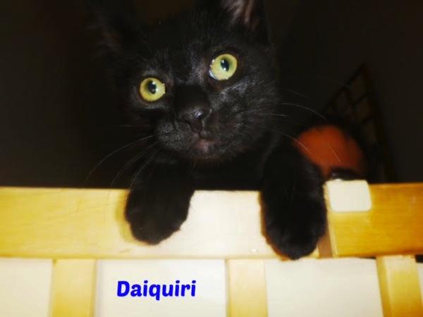 daiquiri1