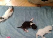 Three Abandoned Kittens. Annie, Joseph And Mathias, For Adoption