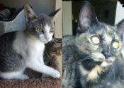 Quacey and Nokimos. Adorable, Adoptable Kittens – UPDATE
