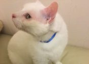 Zeus. Abandoned, Friendly, Rescue Cat For Adoption