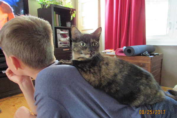 Bou. Female cat needs new home. Toronto GTA Durham Region