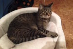 Kennedy. Sociable, Friendly, Female Cat In Need Of New Home