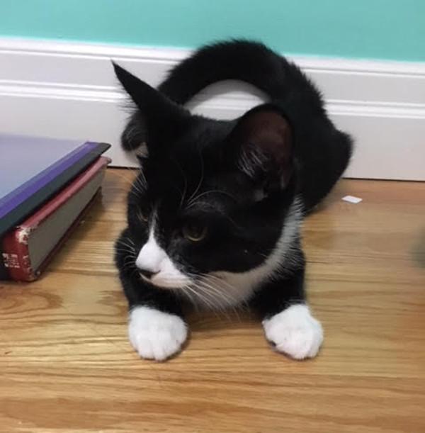 Margarita. Rescue kitten for adoption.