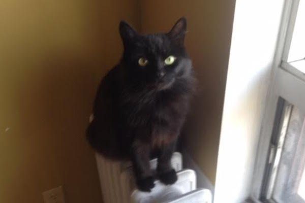 Mr Spock. Tribble. Cats need home as elderly owner enters care
