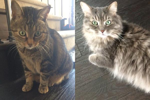 Pippa and Catherine. Cats seeking new home, GTA Toronto Durham Region pet rehoming