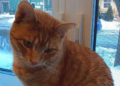 Aria. Sweet, Beautiful 'Lap Cat' Must Find New Home