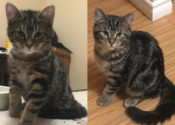 Vixen And Comet. Playful Rescue Kittens Wishing For New Home(s)