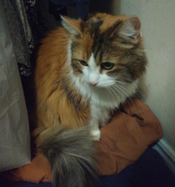 cat rescue iowa
