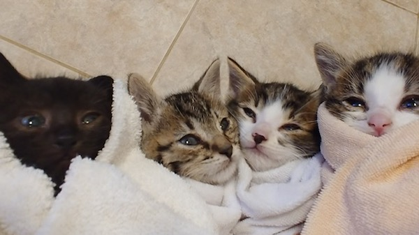 The Nature Kittens  Four Rescue Kittens – UPDATE | Oasis